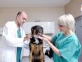 动物急诊室 手术马拉松