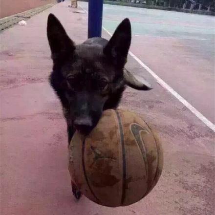 图为被碾压漂泊狗。
