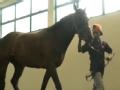 动物急诊室 生存保卫战