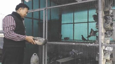 退休后,养鸽子是刘元弟的一大爱好