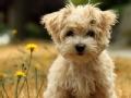 动物急诊室 坚强的小狗