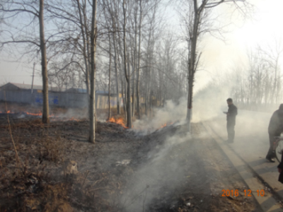 河北省衡水市282省道西延湾村左近大片树叶燃烧发生浓烟