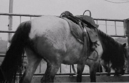 神吐槽:眼前是头牛 心中是一万只草泥马图片