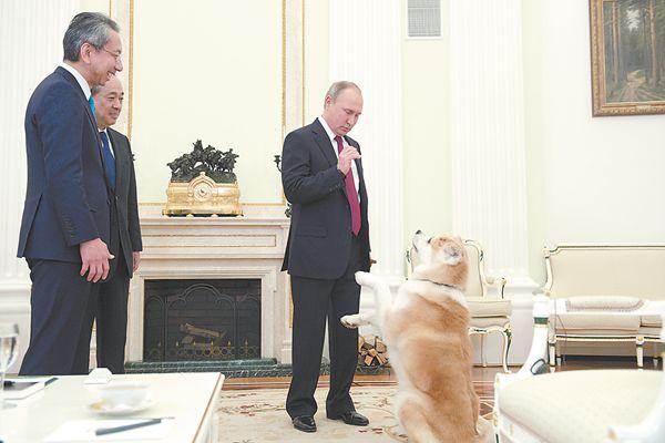 接受日媒采访时,普京把日本送的秋田犬带到现场。