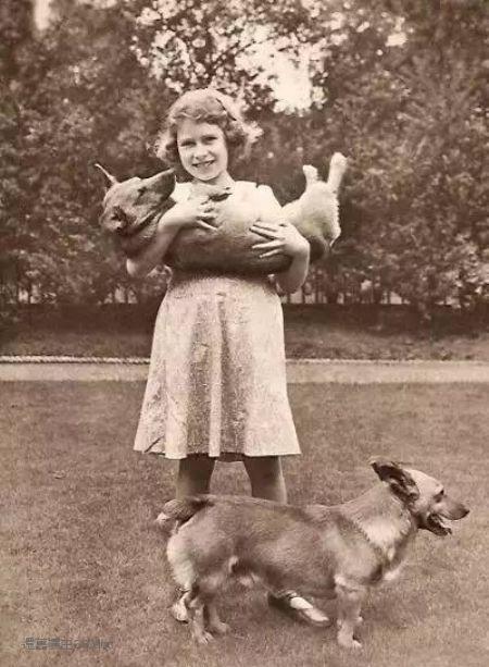 神吐槽:我见过的人越多 我就越喜欢狗图片
