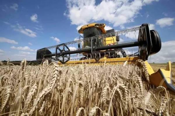 """而联合国今年发布的一份报告显示,全球粮食库存在近30年不断下降,目前全世界约有8亿饥饿人口。如果全世界143亿亩盐碱地都能种上海水稻,其""""世界意义""""将不言而喻。"""