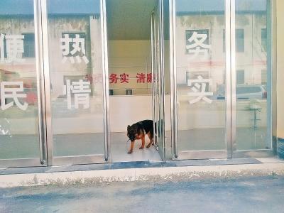 鹿邑县赵村乡办事大厅内跑进一条狗。