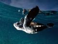 环境特工 海龟营救(下)