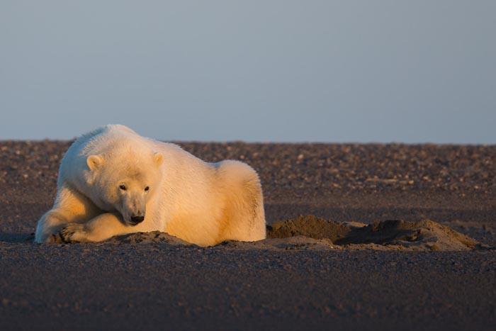 看着这熊,仿佛看到了盼望下雪的南方人。