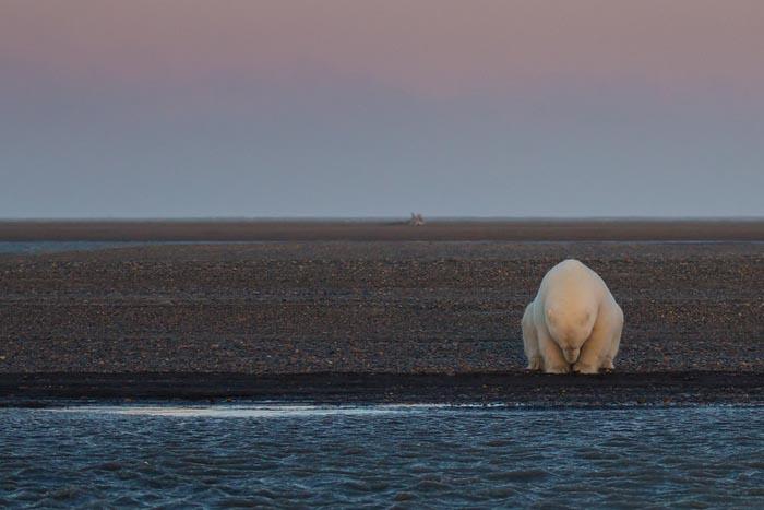 这张触动人心的照片获得了2016美国国家地理杂志自然摄影师奖,被认为是对气候变化影响的生动描写。