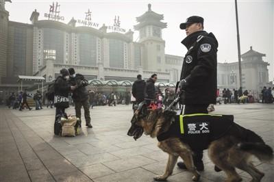 1月1日,北京铁警安排警犬在北京火车站巡逻直至春运结束。警犬负责搜寻易燃易爆危险品。新京报记者 彭子洋 摄