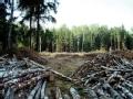 环境特工 拯救森林(下)