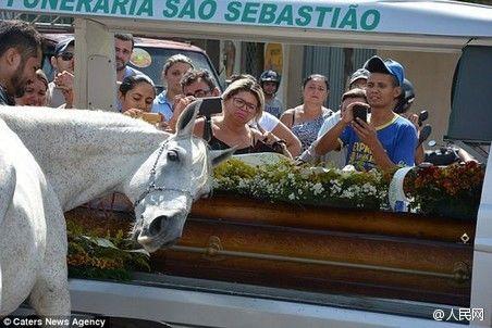 动物也深情!巴西白马出席主人葬礼哀鸣不止