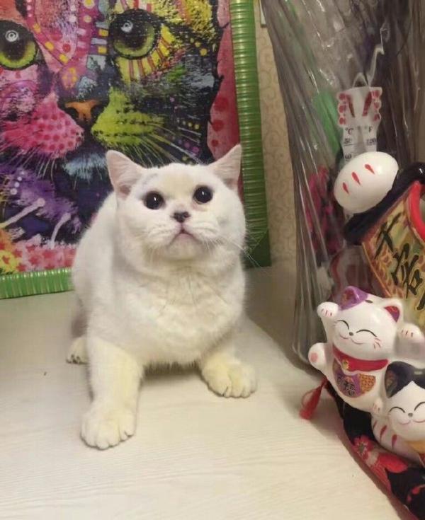小猫生前照片