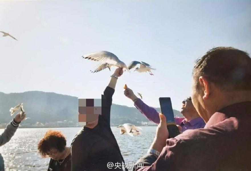 游客抓海鸥拍照被制止后摔断海鸥翅膀