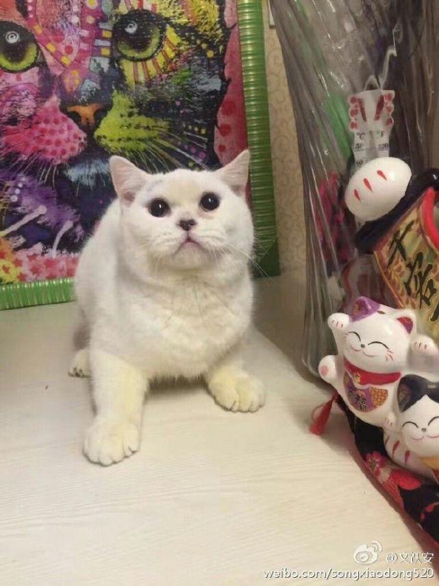 被虐杀的小猫