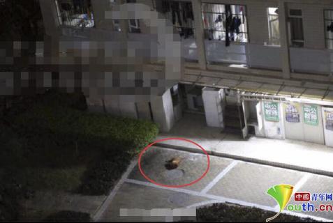 事发当晚流浪狗被从三楼窗口扔出(微博截图)