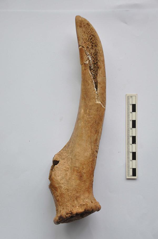陕西考古遗址新发现:西安远古时期或有野生鳄鱼出没
