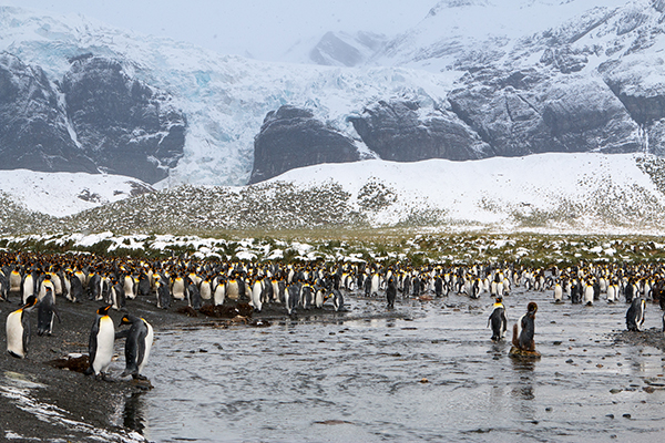 25万只帝企鹅聚集在海滩上。 本文图片均为 视觉中国 图