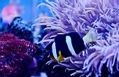 神奇美丽的海底世界