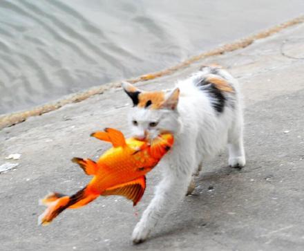 吃了这条锦鲤,可能会更有好运哦。