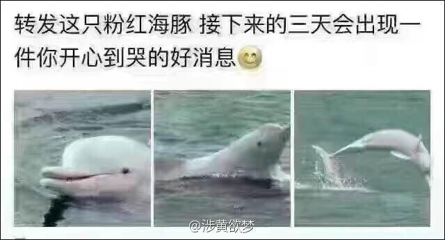 但是一物降一物啊,你的粉红海豚也会被吃掉哦。