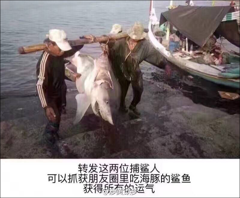 转发这两位警察,可以逮捕盗抓鲨鱼的渔夫,获得朋友圈所有运气。