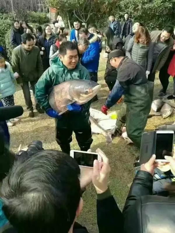 (原题为:《华南鱼工大学:暑假刚开端,整湖鱼就被捞下去免费吃掉》)