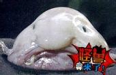 实拍深海恐怖人脸怪鱼