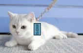 神器居然能把猫咪当狗遛