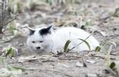 猫冬计划,传递有爱之美