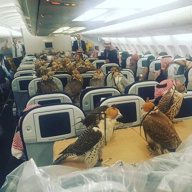 据《每日邮报》1月31日报道,一张沙特王子带着他的80只鹰乘坐飞机的照片火了。