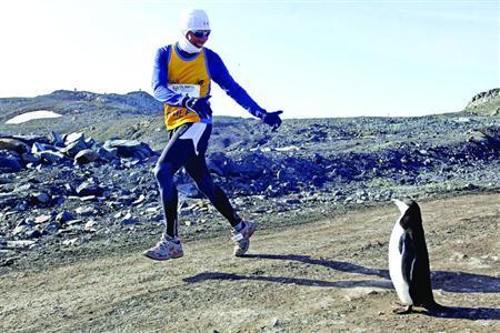 一名参赛者参加南极马拉松赛时向一只站在路边的企鹅打招呼/新华社