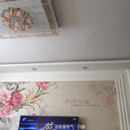 看到这种比脸盘还大的牡丹蔷薇菊花桃花,大概就知道家里管事儿的是谁了。
