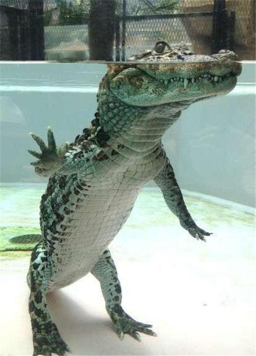 网友@-北野Kitano- 晒出一张上海水族馆F4的照片:暗中观察X4……