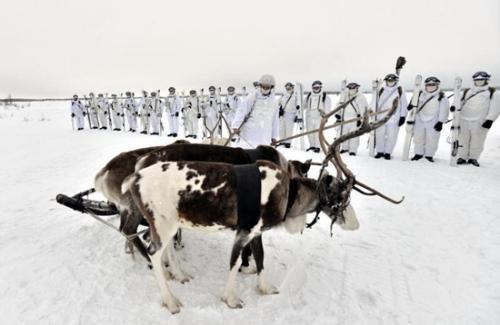 在俄罗斯西北摩尔曼斯克(Murmansk)附近的冰原上,俄北方舰队的北极步兵旅演练如何乘麋鹿牵拉的雪橇进行战斗任务。俄北方舰队司令部就在摩尔曼斯克,由于北大西洋暖流作用,那里有终年不冻港。