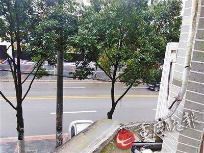 二楼窗外是露台,距离露台1米开外是行道树。