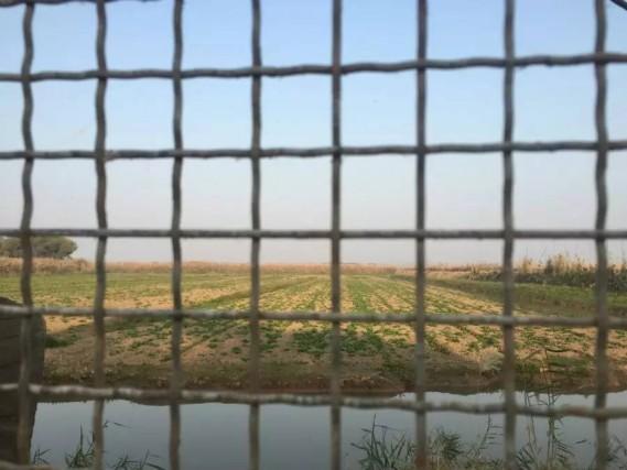 网围饲养户开垦洞庭湖湿地莳植蔬菜