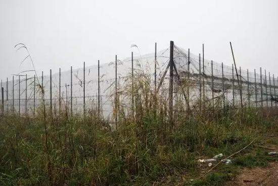 洞庭湖拆围之困:本地曾激励饲养,抵偿与渔民安顿成新成绩