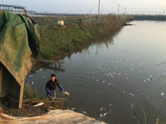 网围饲养户在捕捉水产物