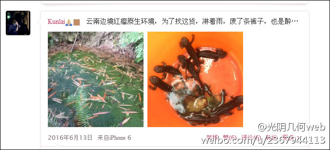 李某微博@Kunlai附图中数量较大的国家二级保护动物棕黑疣螈