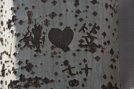 从刻下的内容判断,起始时间应该在2012年,2016年仍在继续,被爱的女孩叫刘X婷,而刻字人叫X笠。从两人相爱的那一天开始,笠便选择了这片公园的杨树林,将林内树木当做自己的日记本,这也是杨树开始遭殃的起点。笠每逢一些节日和婷生日的那一天,都会在这里刻下想说的话语。