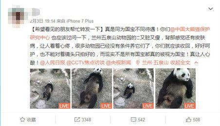 """兰州动物园大熊猫""""蜀兰""""瘦"""