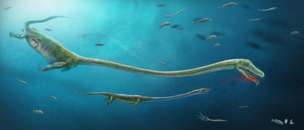 怀孕恐头龙的复原图。 本文图片均由刘俊提供。