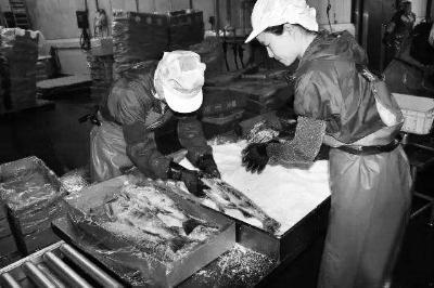 中国研修生在日本实为低端劳动者,从事往鲑鱼身上抹盐等简单工作 图/新华国际