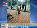 北京老虎伤人事件:当事人已做伤情鉴定 等待开庭