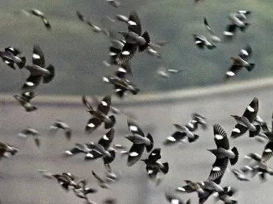 """世界卫生组织总干事陈冯富珍日前指出,自2013年起,中国报告出现季节性""""人感染H7N9禽流感""""病例已逾1000例。"""