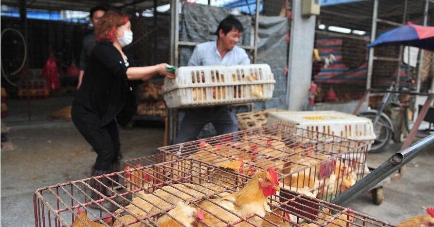 春节前后,省际、省内活禽交易与流通十分活跃,市民进入市场购买活禽的机会增多。