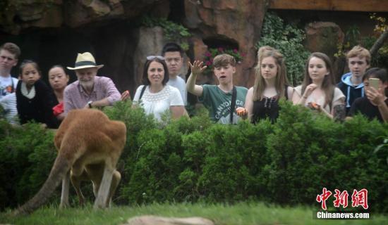 游客正观赏袋鼠。孟德龙 摄