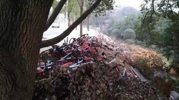 市发在网上发布的武汉东湖摩拜单车被丢到荒地的照片